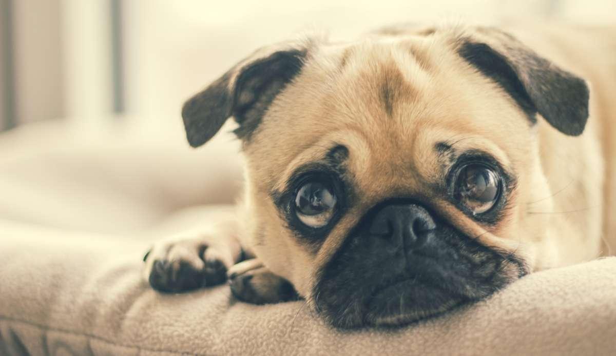 Mag een verhuurder huisdieren verbieden?