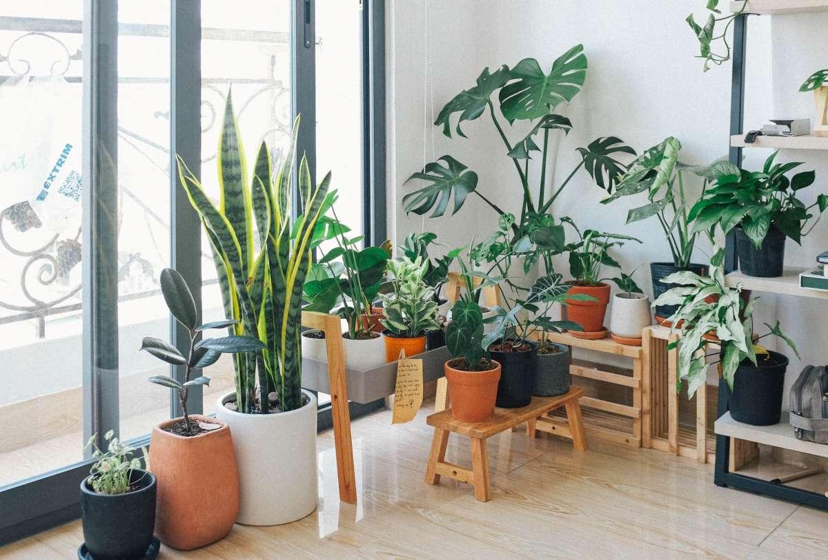Kamerplanten verzorgen: laat ze het licht zien!